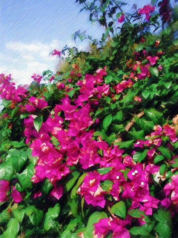 Bougainvillea Art Print featuring the photograph Bougainvillea by Sandy MacGowan