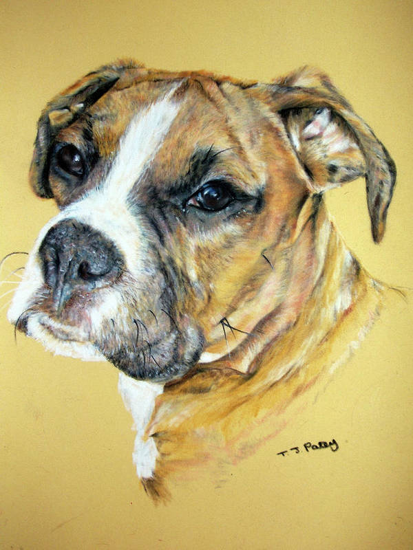 Dog Art Print featuring the painting Boxer by Tanya Patey