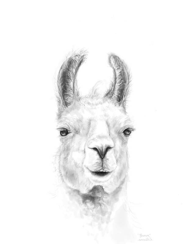 Llama Art Art Print featuring the drawing Brown by K Llamas