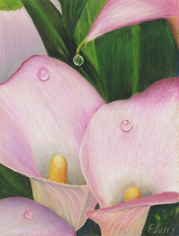 Calla Lily Art Print featuring the drawing Calla Lily by Sheryl Elen