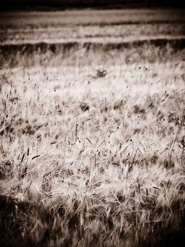 Country Side Art Print featuring the photograph Campo by Felix M Cobos