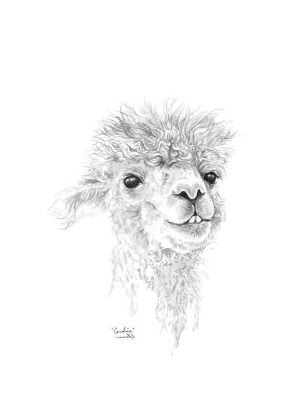 Llama Art Art Print featuring the drawing Candice by K Llamas