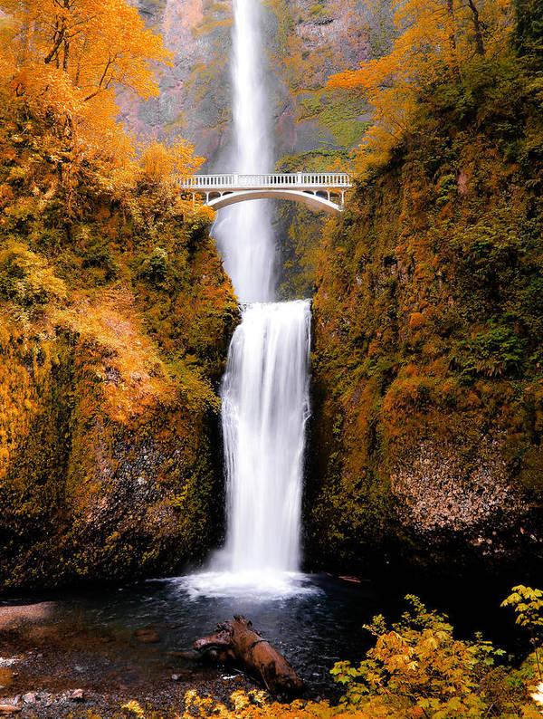 Multnomah Falls Art Print featuring the photograph Cascading Gold Waterfall II by Athena Mckinzie