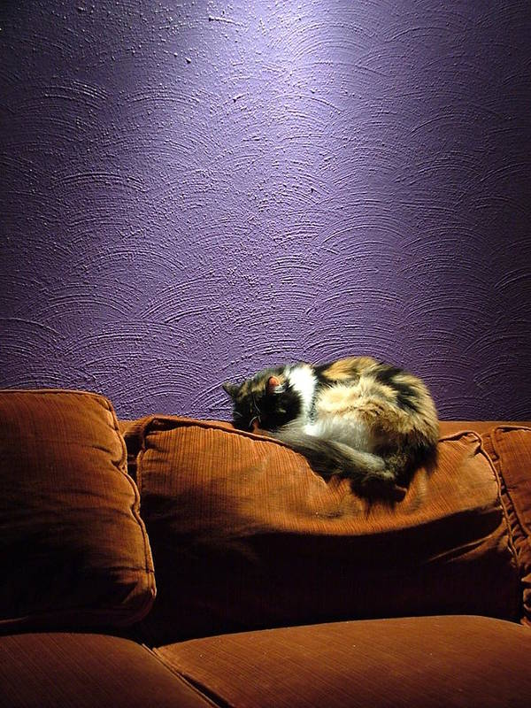 Cat Art Print featuring the photograph Cats Sleep In Odd Places by Geerah Baden-Karamally