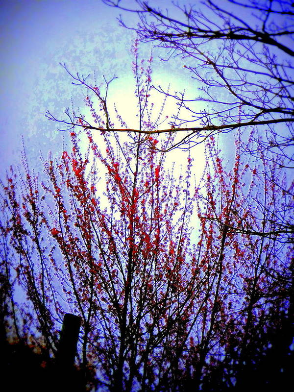 Cherry Tree Art Print featuring the photograph Cherry Moon by Maro Kentros