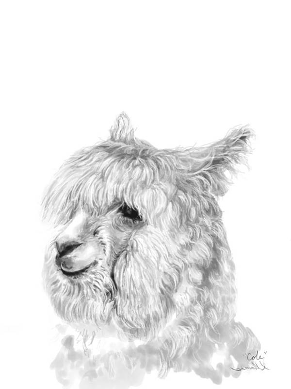 Llama Art Art Print featuring the drawing Cole by K Llamas