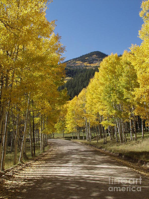 Colorado Fall Color Art Print featuring the photograph Colorado Fall Splendor by Bill Hyde