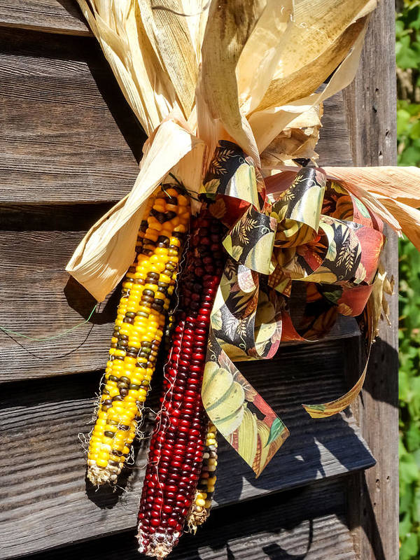 Colorful Indian Corn Decorations Art Print featuring the photograph Colorful Indian Corn Decorations by Cynthia Woods