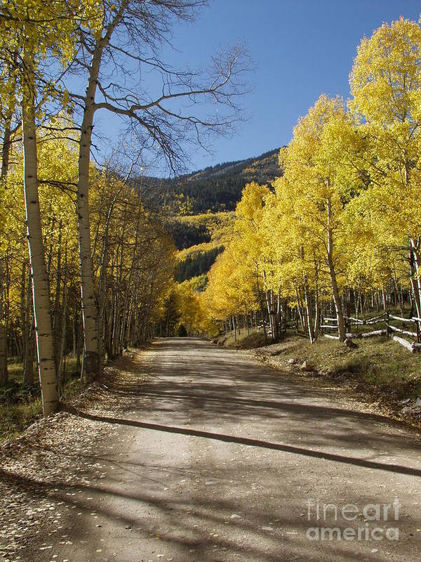Colorado Fall Color Art Print featuring the photograph Conejos In Fall by Bill Hyde