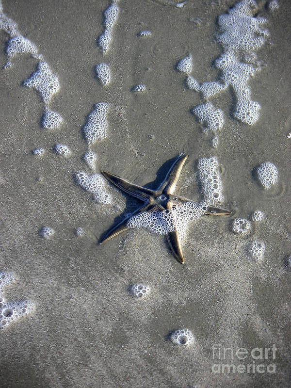 Nature Art Print featuring the photograph Creatures Of The Gulf - A Fallen Star by Lucyna A M Green
