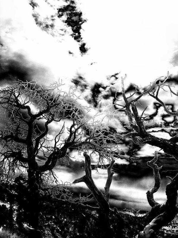 Tree Art Print featuring the photograph Deadwood by Charleen Treasures