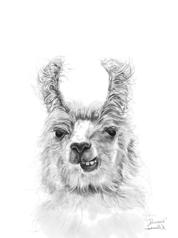 Llama Art Art Print featuring the drawing Dennis by K Llamas
