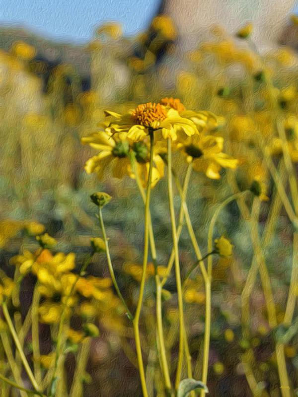 Wild Sunflowers Art Print featuring the digital art Desert Flower Impressions One - Wild Sunflowers by Glenn McCarthy Art and Photography
