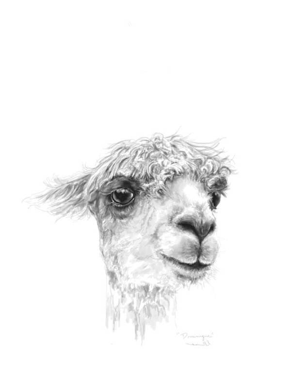 Llama Art Art Print featuring the drawing Dominique by K Llamas