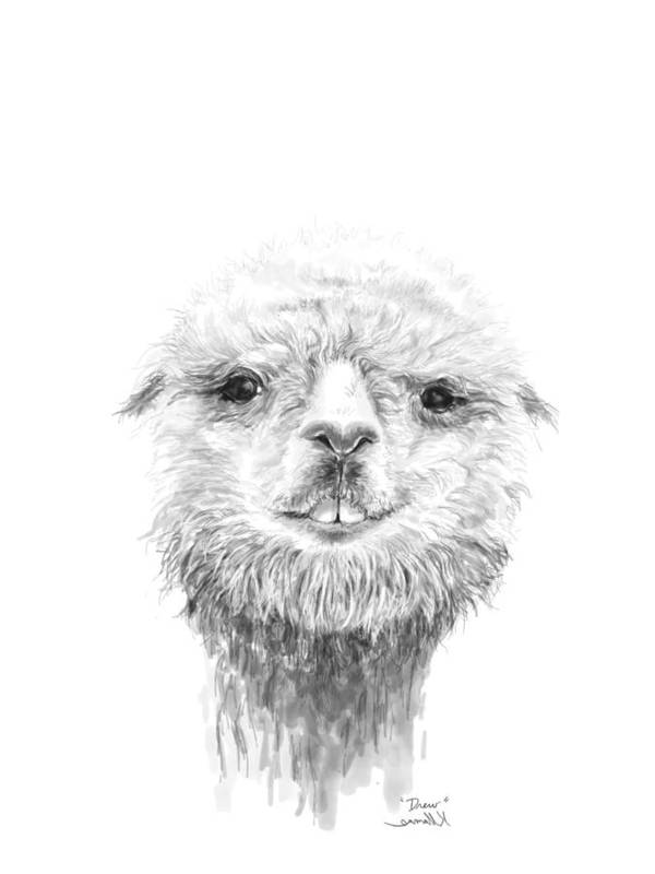 Llama Art Art Print featuring the drawing Drew by K Llamas