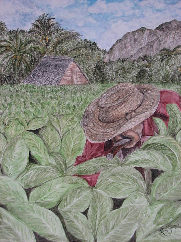 Tobacco Art Print featuring the painting El Campo De Tabaco by Roberta Shaughnessy