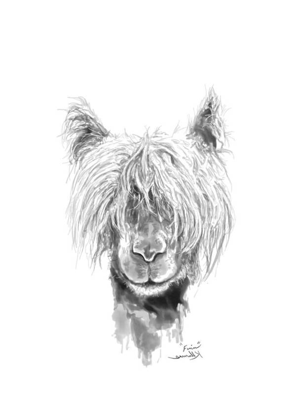 Llama Art Art Print featuring the drawing Finn by K Llamas