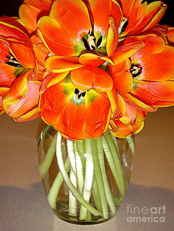 Nature Art Print featuring the photograph Flaming Tulips In A Vase by Lucyna A M Green