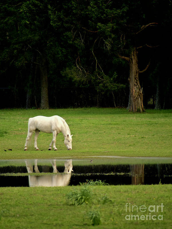 Horse Art Print featuring the photograph Flooded Field In May by Rachel Morrison