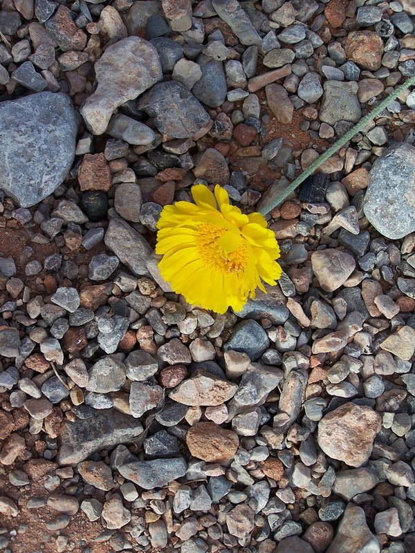 Yellow Art Print featuring the photograph For You My Love by Vijay Sharon Govender