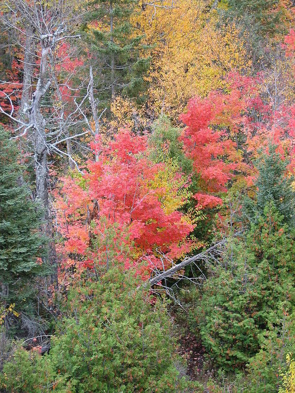 Fall Art Print featuring the photograph Forest Fire by Kelly Mezzapelle