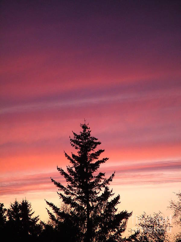 Sunset Photo Art Print featuring the photograph Forest Grove Sunset by Nick Gustafson