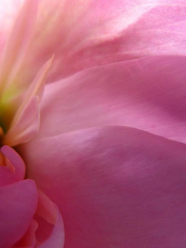 Flower Art Print featuring the photograph Fragment by Rhonda Barrett