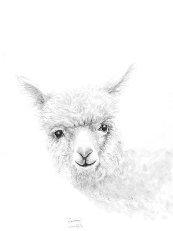 Llama Art Art Print featuring the drawing Gemma by K Llamas