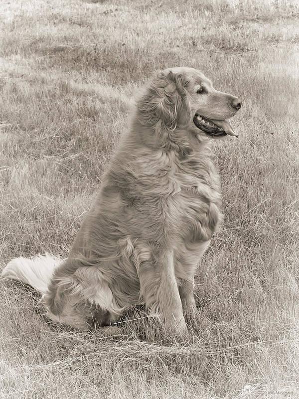 Golden Retriever Art Print featuring the photograph Golden Retriever Dog Sepia by Jennie Marie Schell