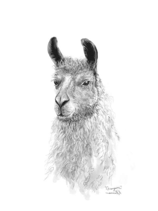 Llama Art Art Print featuring the drawing Grayson by K Llamas