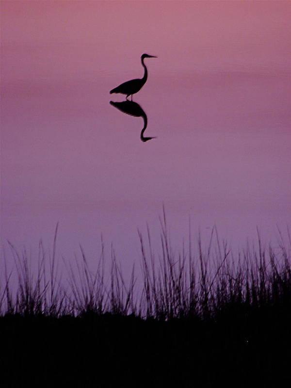 Great Blue Heron Art Print featuring the photograph Great Blue Heron IIi by Brett Winn