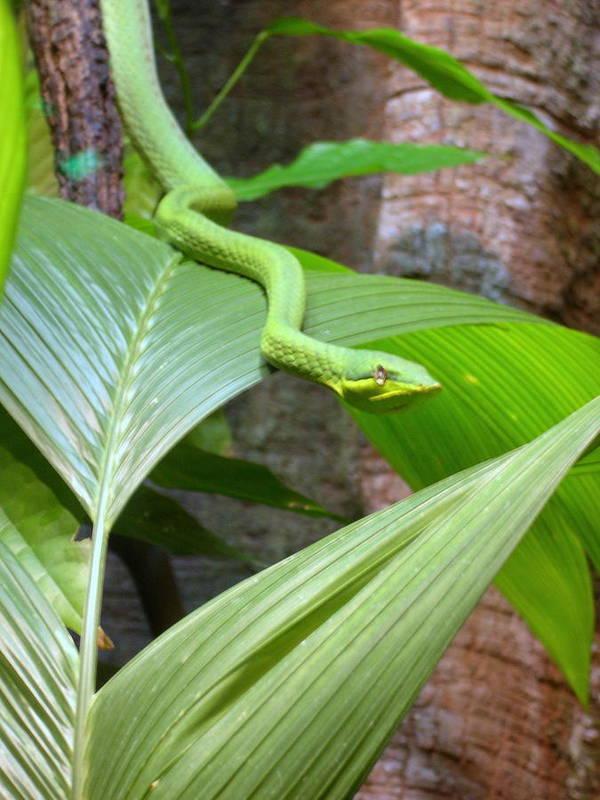 Snake Art Print featuring the photograph Green On Green by Joseph Battaglia