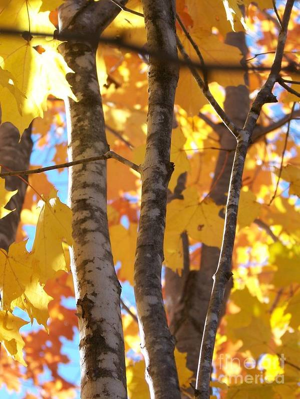 Trees Art Print featuring the photograph Growing Gold - Photograph by Jackie Mueller-Jones