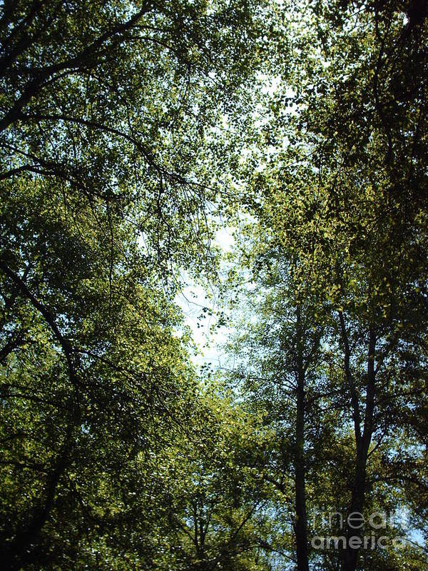 Trees Art Print featuring the photograph Guardians by Brian Edward Harris
