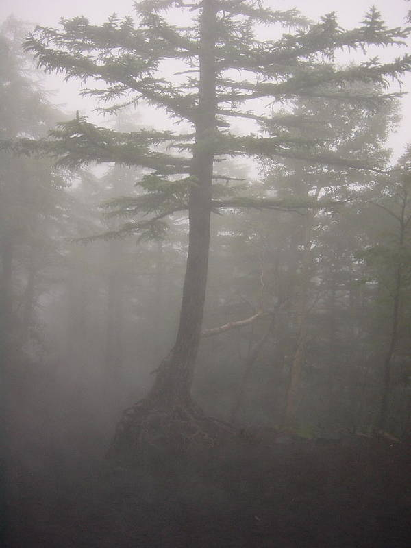 Forrest Art Print featuring the photograph Haunted Forest by D Turner