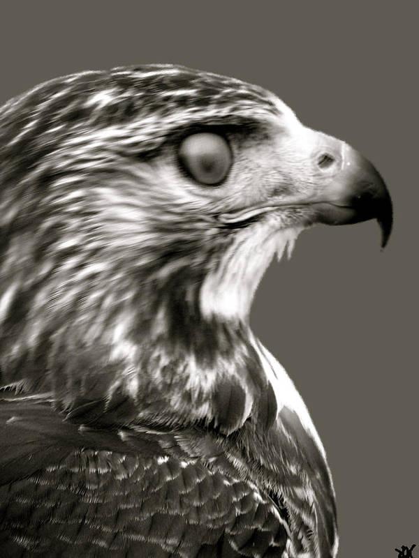 Hawk Profile Art Print featuring the photograph Hawk Profile by Debra   Vatalaro