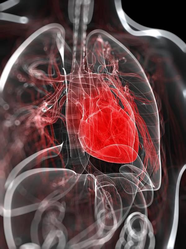 Vertical Art Print featuring the digital art Heart Anatomy, Artwork by Sciepro