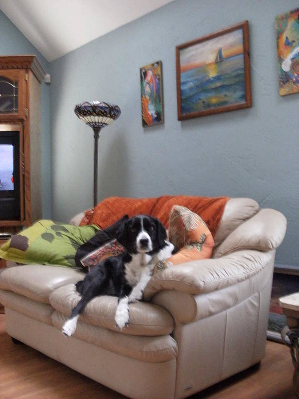 Couch Art Print featuring the photograph I Am Not A Couch Potato. I Am A Couch Dog by Anne-Elizabeth Whiteway