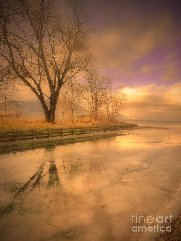 Tree Art Print featuring the photograph Ice And Light by Tara Turner