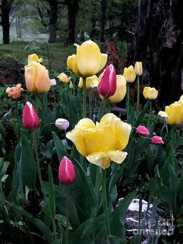 Tulips Art Print featuring the photograph In The Garden by Judy Waller