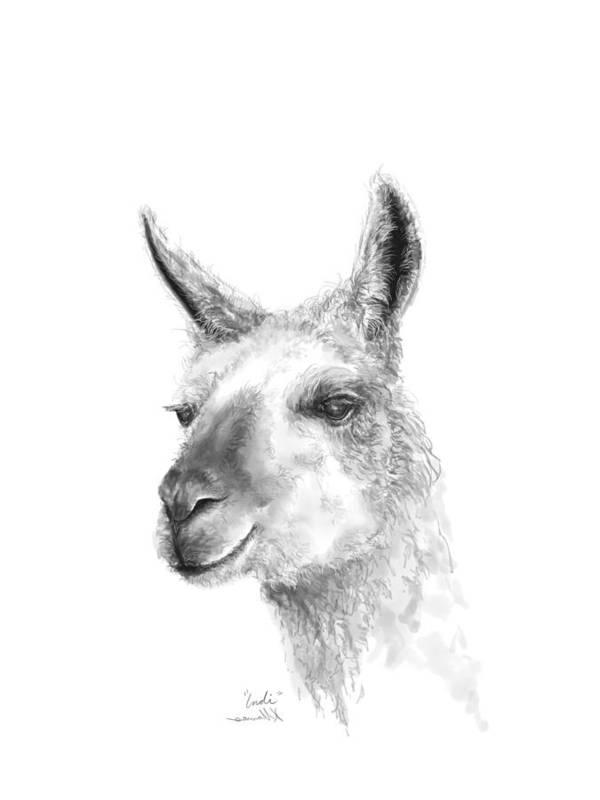 Llama Art Art Print featuring the drawing Indi by K Llamas