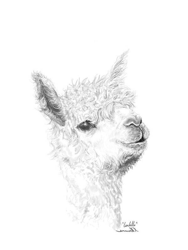 Llama Art Art Print featuring the drawing Isabella by K Llamas