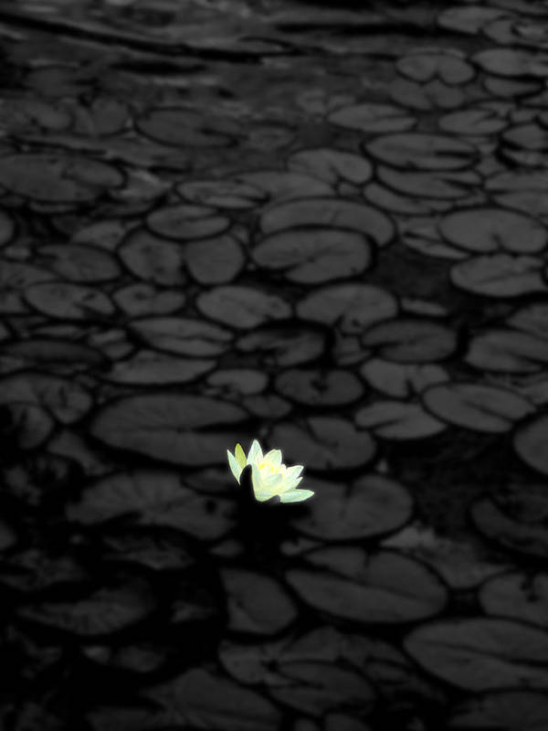 Flower Art Print featuring the photograph Isolation by Roberto Alamino