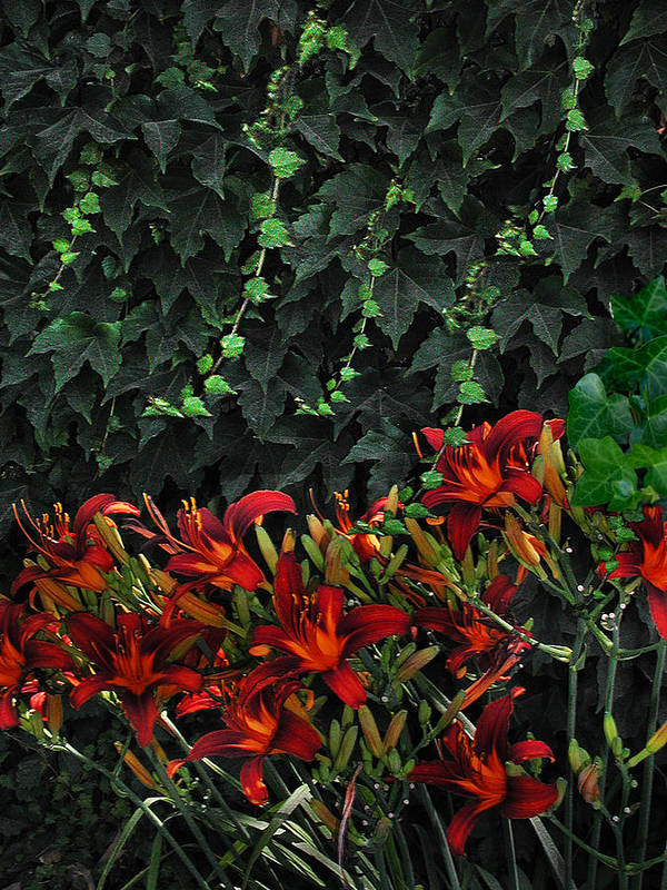 Flowers Landscape Art Print featuring the photograph Ivy Over by Richard Gordon