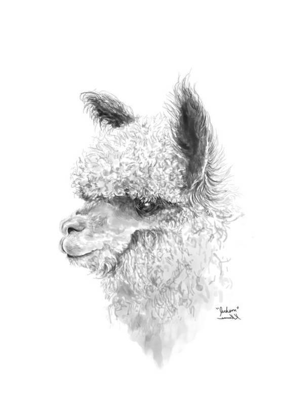 Llama Art Art Print featuring the drawing Jackson by K Llamas