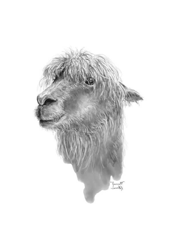 Llama Art Art Print featuring the drawing Jarrett by K Llamas