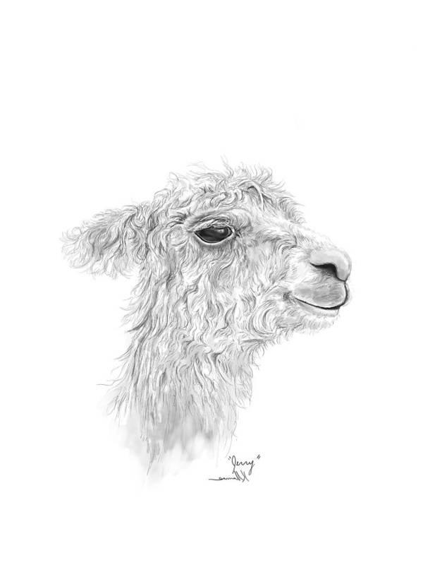 Llama Art Art Print featuring the drawing Jerry by K Llamas