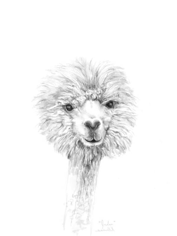 Llama Art Art Print featuring the drawing Jordan by K Llamas