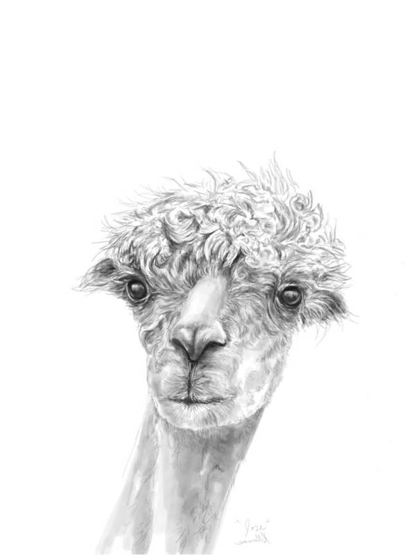 Llama Art Art Print featuring the drawing Jose by K Llamas