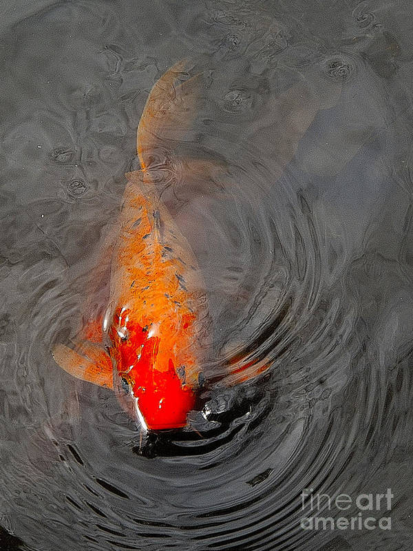 Fish Art Print featuring the photograph Koi At Byodo Temple by Neil Doren